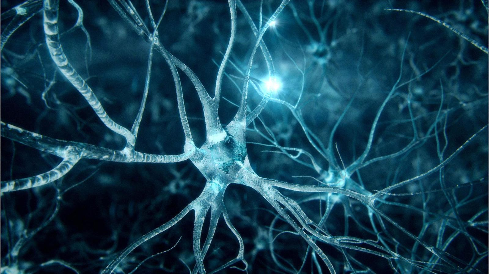 abstract-neurons-wallpaper-1 (1).jpg